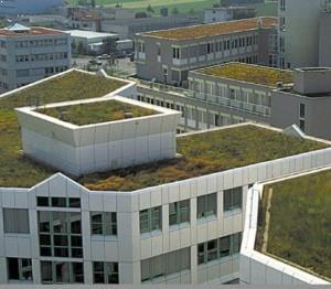 Azotea verde ahorra energia
